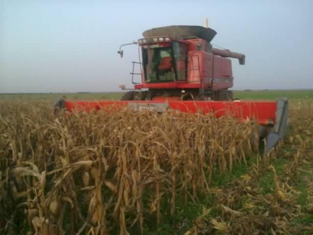 Fotografía de cosechadora en maíz