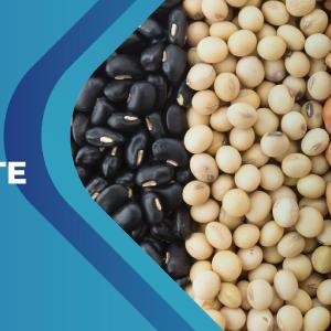 Manejo eficiente de granos en poscosecha y BPAs